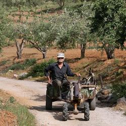 Boer op Kreta