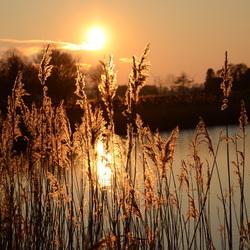 Goude zonsondergang door het riet
