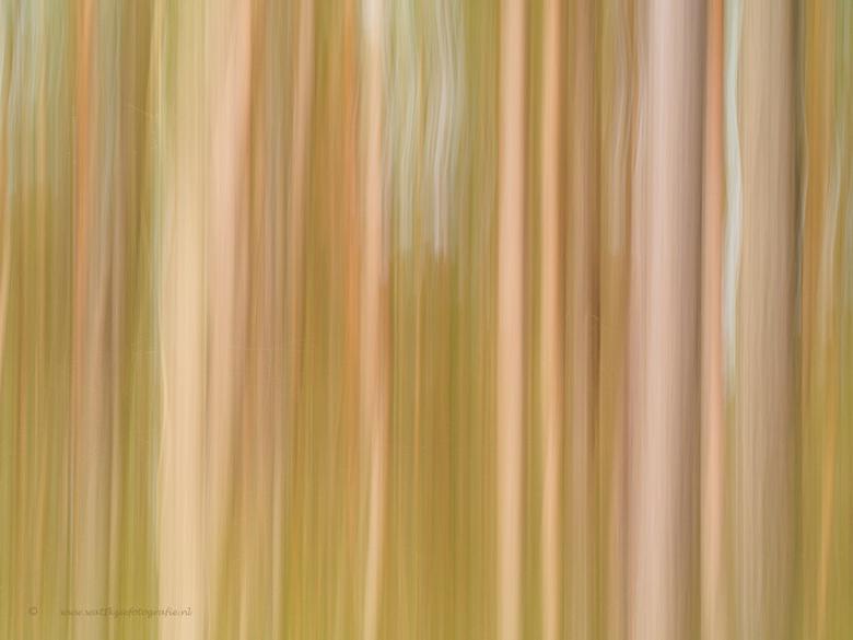 Grafisch bos