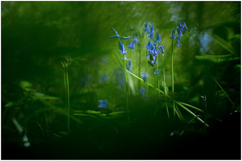 Bluebell Fairytale - Of: Gisteren in het Hallerbos