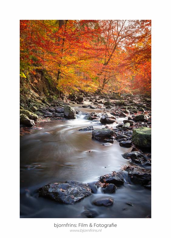 Herfst in de Hoge Venen -