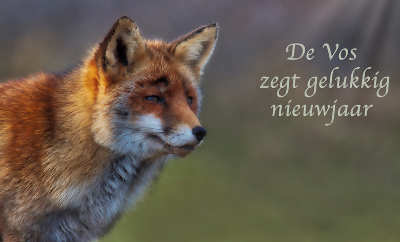 De vos zegt