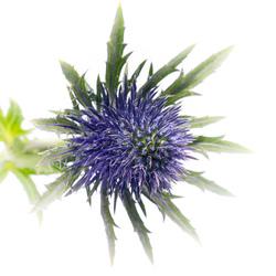bloemenpurple-8434
