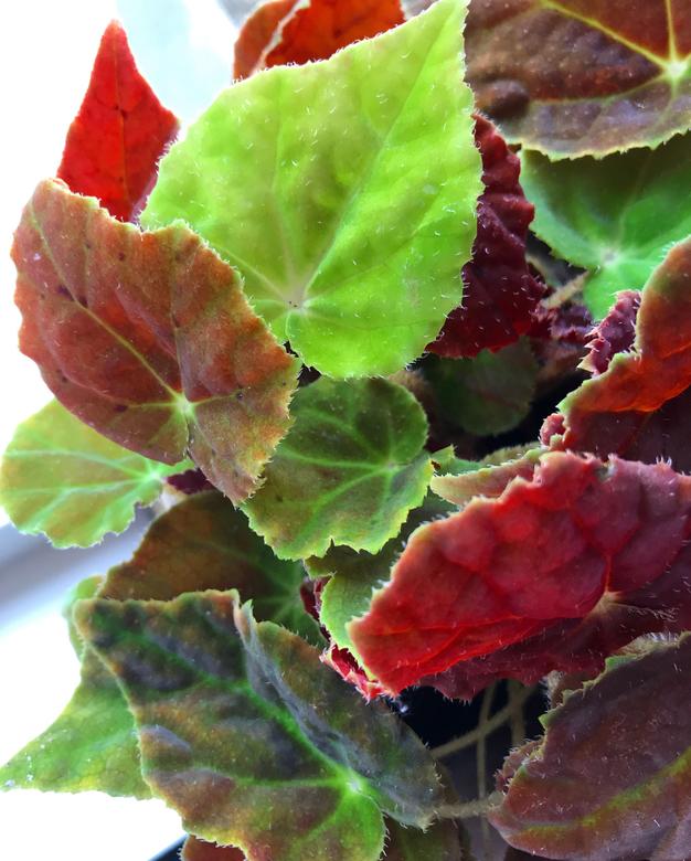 2 - Silk leaf -