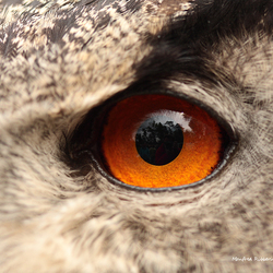 The eye...