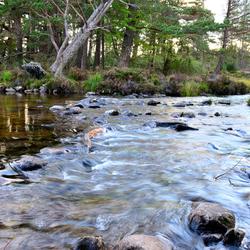 Forrest Loch Morlich