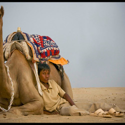 Camelboy at ease