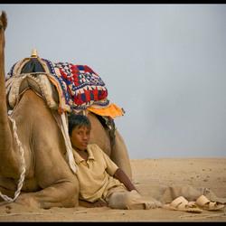 Camelboy at ease