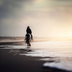 A day at the beach @ horse