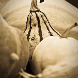 Oude kalebassen