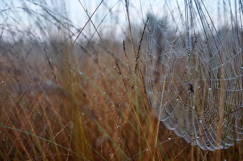 Kriebelbeestjes in de grassen - Een mooi geweven net met rijp erop en de maker er middenin. Kunst in de natuur