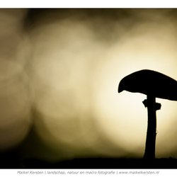 Mushroom mood | Duivelsberg | Berg en Dal