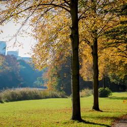 Het Haagse bos, skyline
