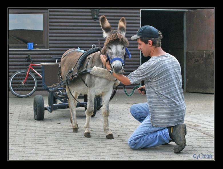 Ezeltje trek - met dit ezeltje en karretjes worden de etensresten in het Meanderdorp speciale plaats voor zwaar en lichte gehandikapten <br /> opgeha