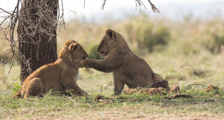 schouderklopje in de wild life - http://wildplanetphotomagazine.com <br /> <br /> <br />  Ik ben super trots dat mijn foto is uitgekozen om in hun