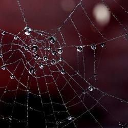 Parels in een spinneweb