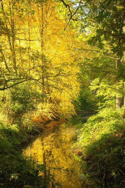 Herfstkleuren.... - Prachtige gouden herfstkleuren in het bos!<br /> Echt genieten zo!