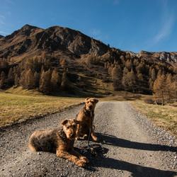 Onze honden in herfstkleuren