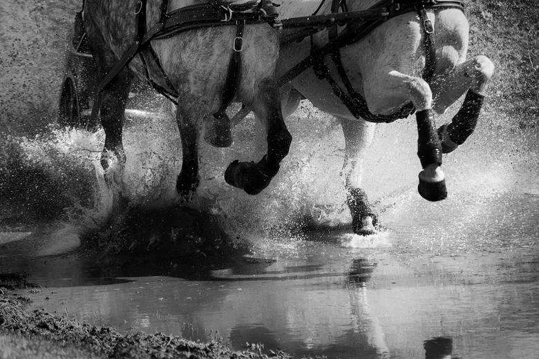 Paardenmennen