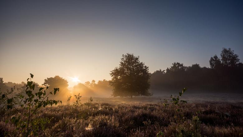 Een mistige morgen - Deze foto is gemaakt op de Ravenvennen Maasduinen Limburg
