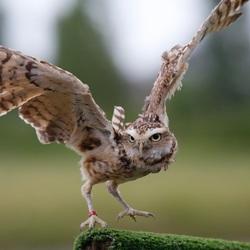 Veilige landing
