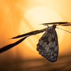Butterfly in sunlight
