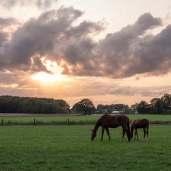 Paarden en wolken