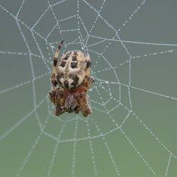 In een nat web