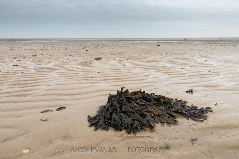 Eindeloos. - Winter en eb op het strand van  Texel.