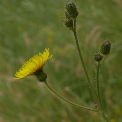 Een bloemetje opgezocht