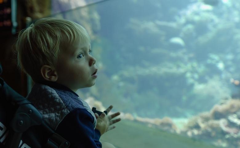 Dubbel genieten - Kleine vissen, grote vissen indruk.......<br /> Bij Burgers&#039; Ocean<br /> <br /> <br /> <br /> Bedankt voor alle reacties o