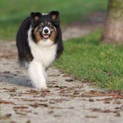 Hond van de buren