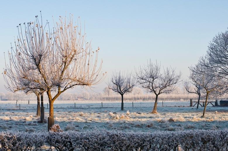 Winter wonderland - Een boomgaard in winterslaap