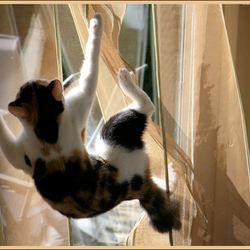 Kat in de gordijnen   Overig foto van rob migchelbrink   Zoom.nl