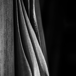 Amaryllis bladeren