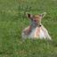 Eerste foto van Bambi