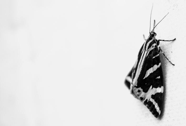 Vlinder in zwartwit  -