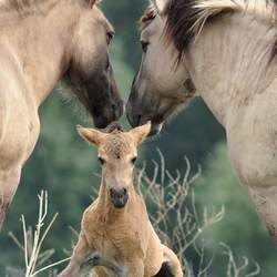 The love of horses
