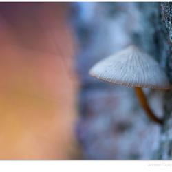 Treetrunk hideout