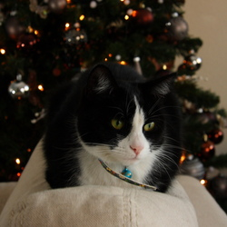 kerst poes