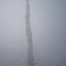 Zwarte Kraai in de mist