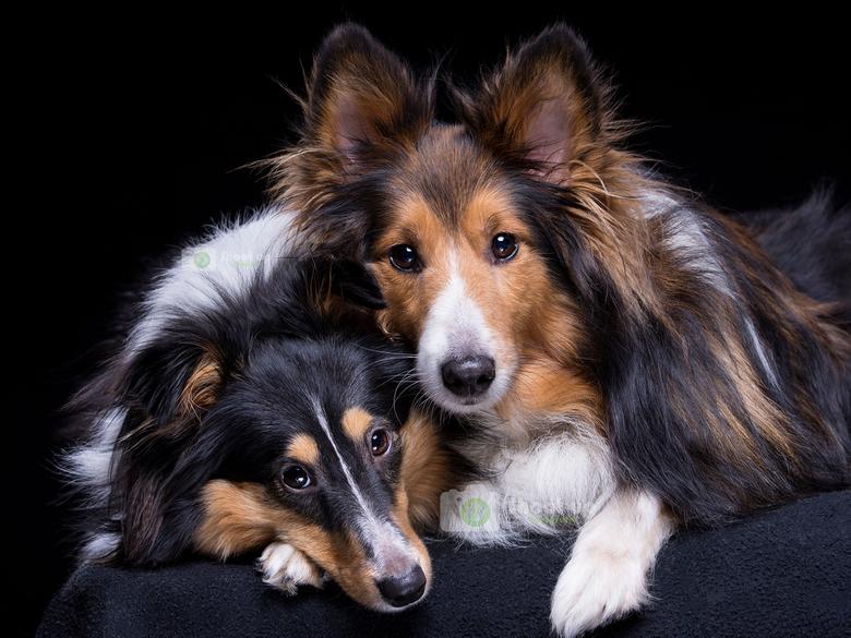 Lekker knus in de studio - Als je honden midden in de shoot lekker tegen elkaar aan kruipen, dan smelt je hart toch gewoon?