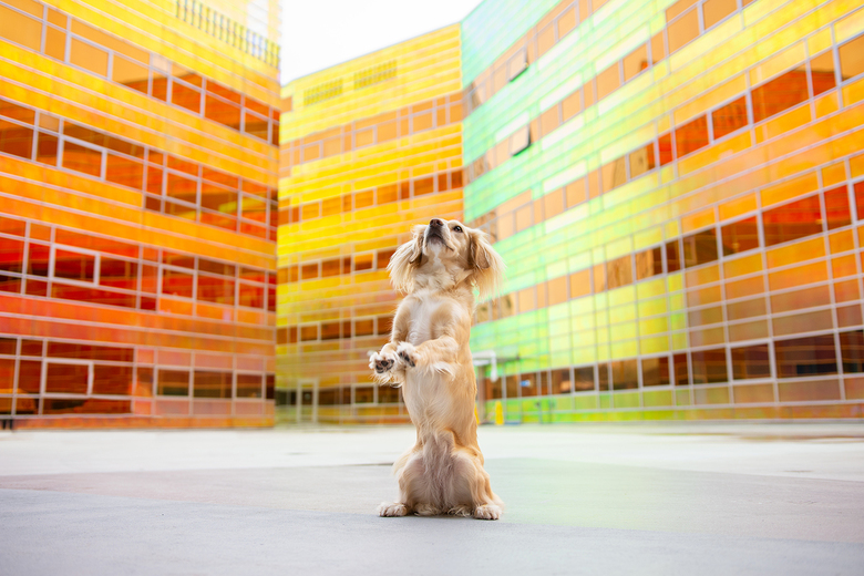 kleur explosie - Vandaag naar deze toffe locatie gereden en deze foto gemaakt.<br /> Ik heb de hond voor deze foto expres in het midden geplaatst zod