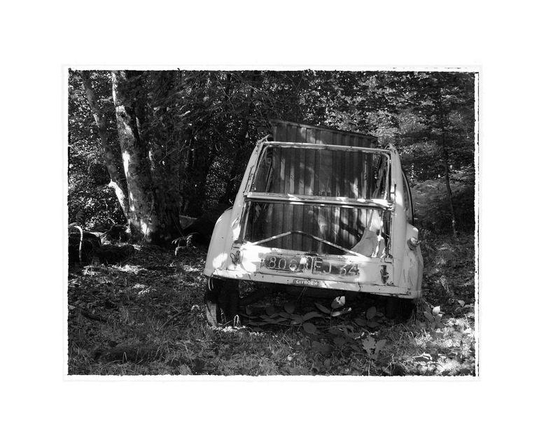 Eendjes in het bos - Tijdens een offroadrit in Zuid Frankrijk kwamen we midden in het bos een aantal eenden tegen.<br /> Hoe ze er gekomen zijn ?<br