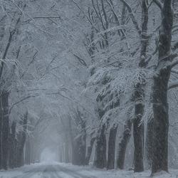 Sneeuwlaan.............