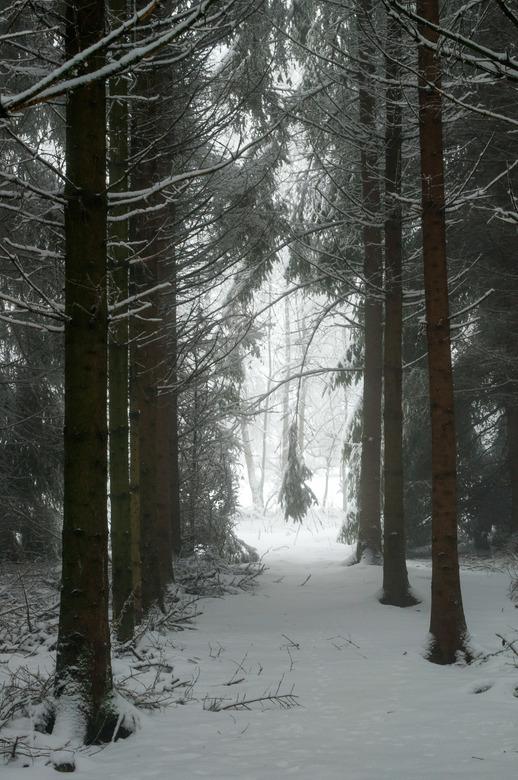 Doorkijk in de sneeuw