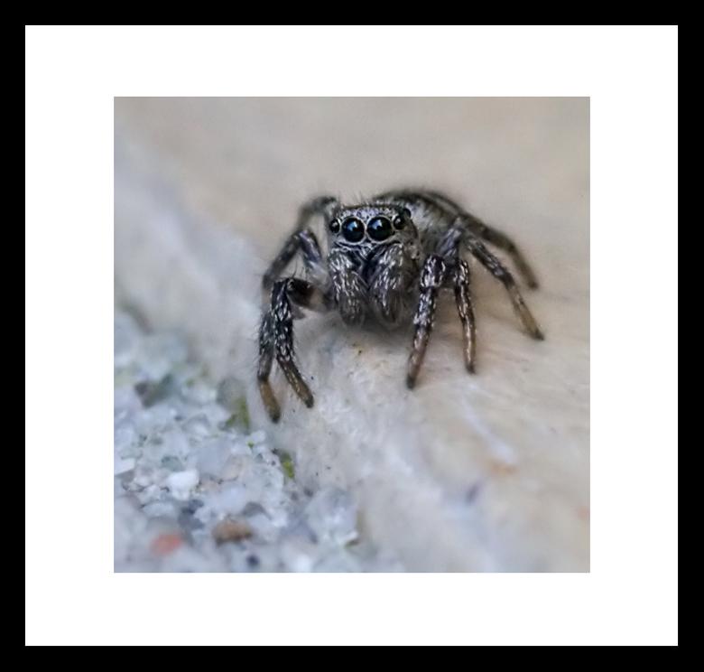 Eerste spin van 2009 -