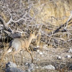 Namibië 163