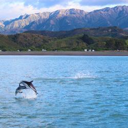 New Zealand Ocean Wildlife