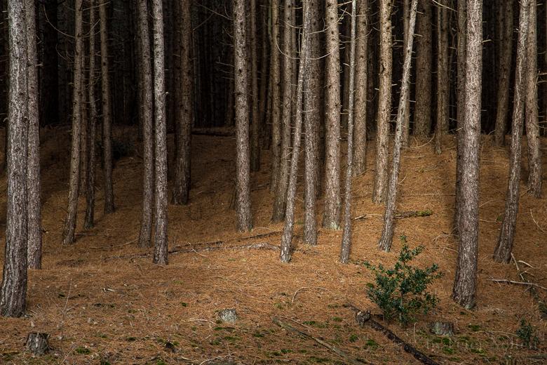 de duisternis van het bos